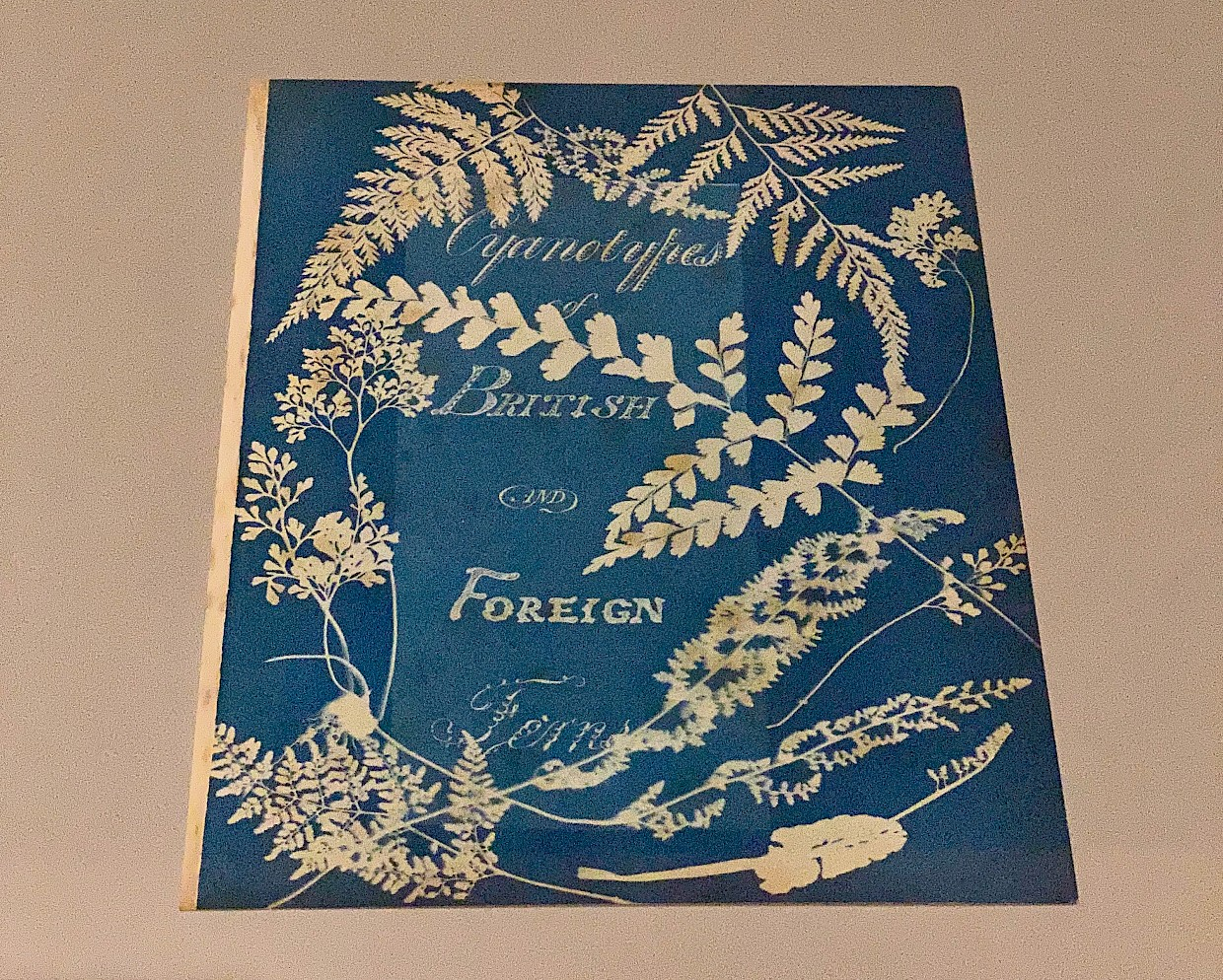 blue book cover of Anna Atkins book on ferns